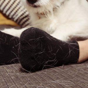 Comment enlever les poils de chat