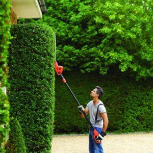 comment Tailler une haie de jardin correctement ?