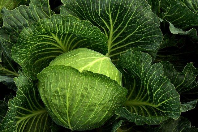 Chou Kale : aliments pour des yeux en santé